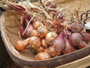 Your Annual Stock of Shallots